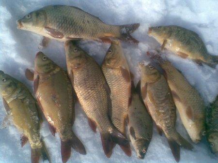 на что клюет рыба осенью