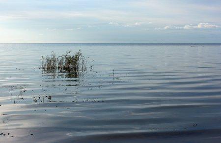 Чудско-Псковское озеро. Псковская область.