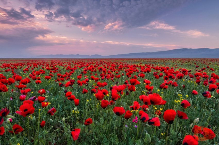 Степи Северного Кавказа