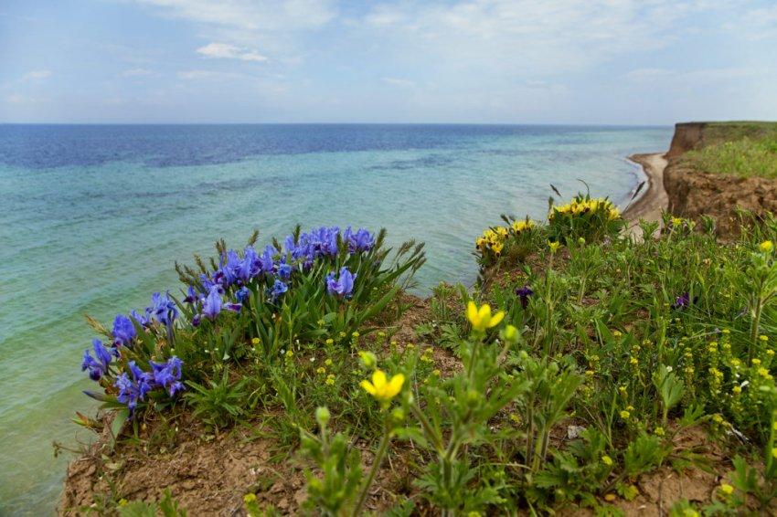 Цветущая степь в Крыму
