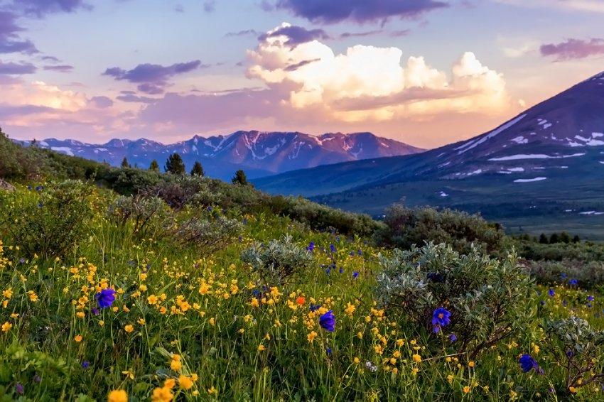 Цветущие степи Алтая
