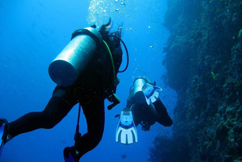 Турция кемер дайвинг живность в море фото можно установить