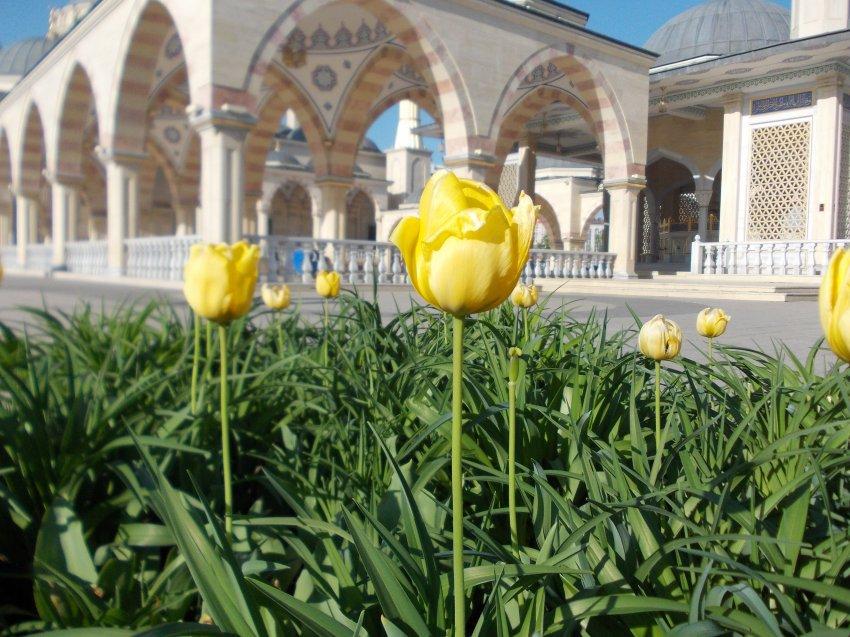 Город Грозный и его главные достопримечательности с описанием и фото
