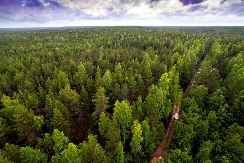 Природные объекты всемирного наследия. Девственные леса Коми